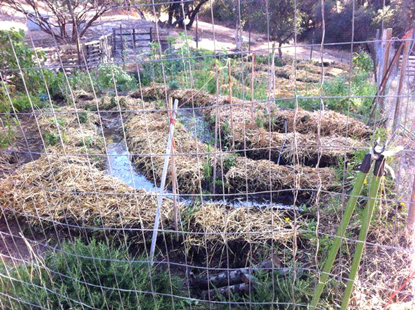 Permaculture garden featuring swales to trap rainwater