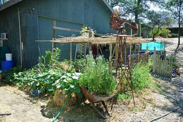Creating a permaculture microclimate with a pergola and vining plants to provide shade for understory plants.