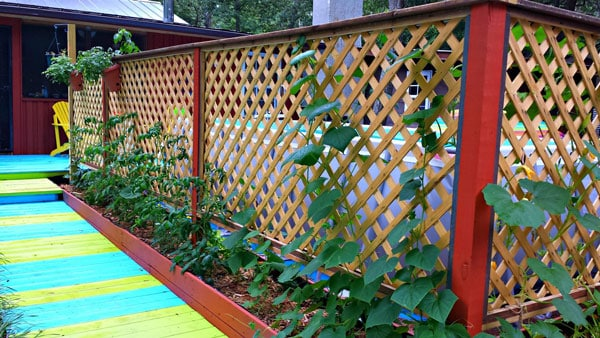 Garden privacy screen uses vertical gardening to shield from nosy neighbors