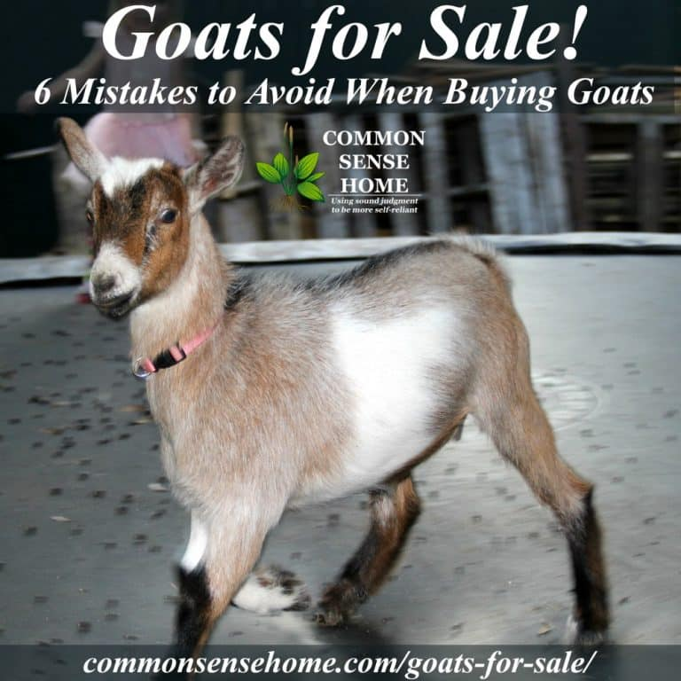 Goats for Sale – 6 Mistakes to Avoid When Buying Goats