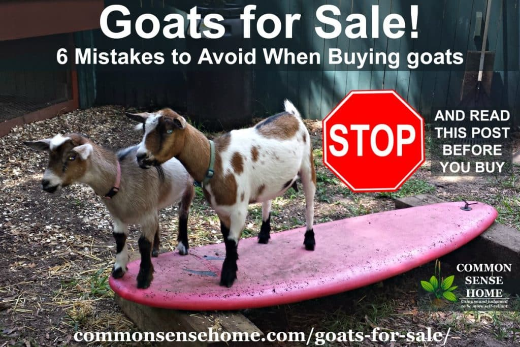 Goats on board
