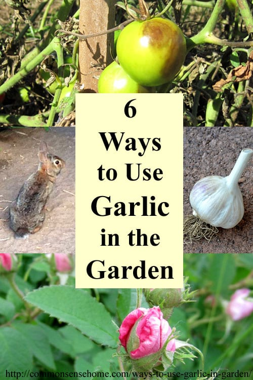 "6 Ways to Use Garlic in the Garden and Yard - From Pest and Disease Control to Companion Plantings, garlic is a ""must have"" for any organic garden."