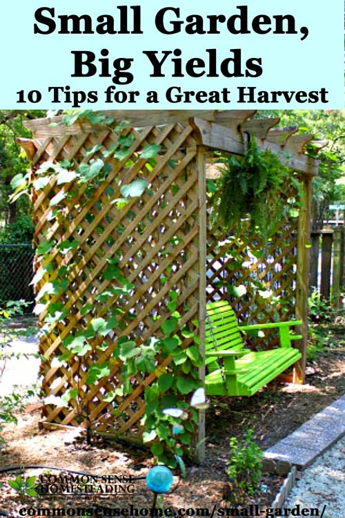 Small garden big yields 10 tips for a great harvest for Small garden areas