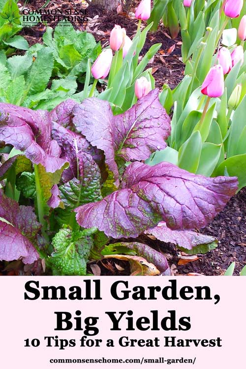 Small garden? No problem. Learn how you can maximize your home food production for high yields in even the smallest planting areas.
