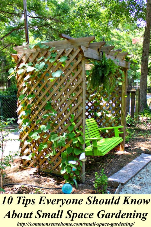 Small space gardening 10 tips everyone should know for Small area planting ideas