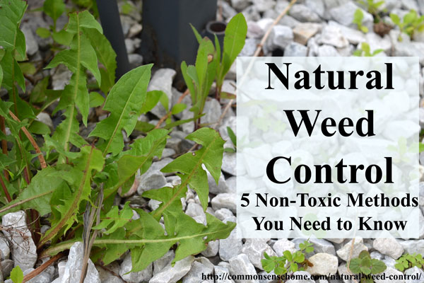 Natural Weed Control - 5 Non-Toxic Methods You Need to Know - from crabgrass to dandelions, keep weeds managed in your yard and garden without poisons.