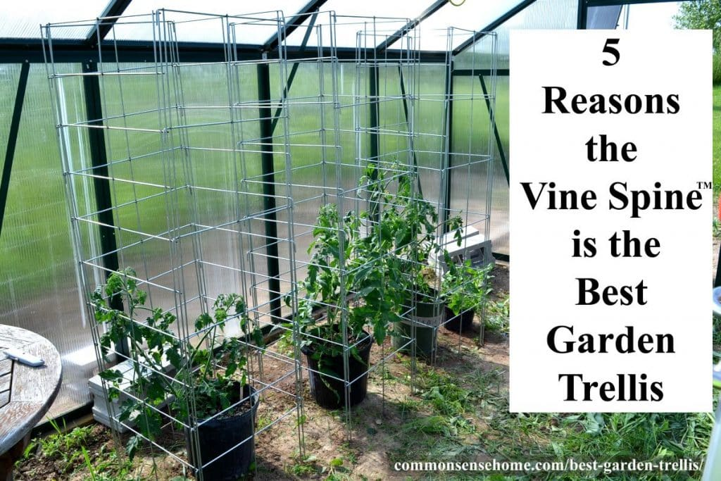 Vine Spine trellises with tomatoes