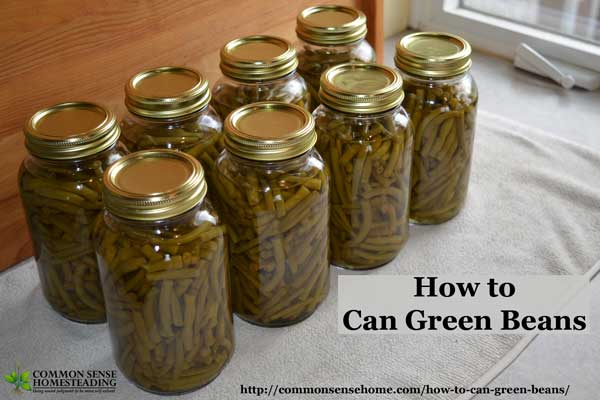 How to can green beans in a pressure canner. Picking, cleaning, processing, headspace, processing times, and altitude adjustments for safe canning.