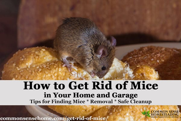 How To Get Rid Of Mice Naturally In Your House