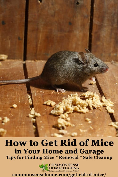 How to Get Rid of Mice In Your House and Garage - Tips for keeping mice out of the house, catching mice and safe cleanup of rodents, urine and droppings.