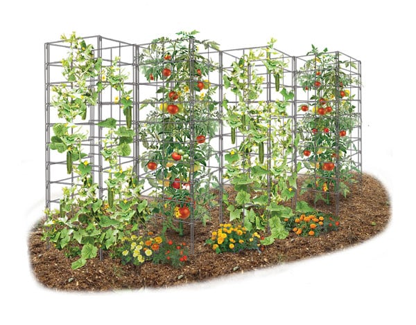 learn how the vine spine garden trellis can make your vertical gardening easier with long