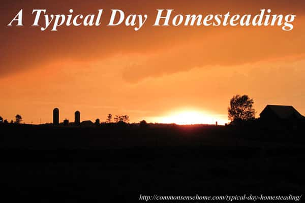 A Typical Day Homesteading - a round robin of posts from 15 different homesteading bloggers sharing a typical day.