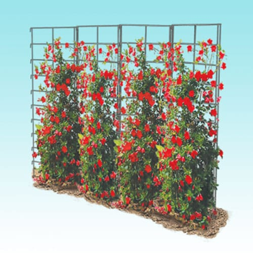 Vine Spine trellis illustration