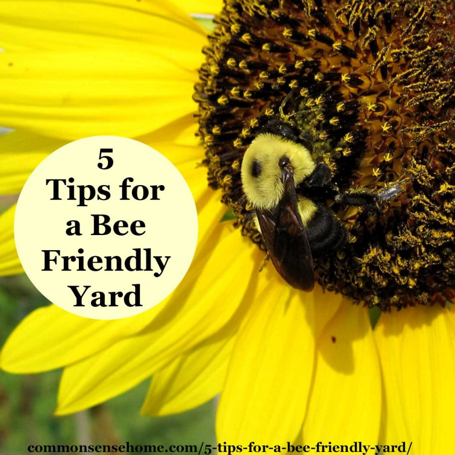 5 tips for a bee friendly yard - bumble bee on sunflower
