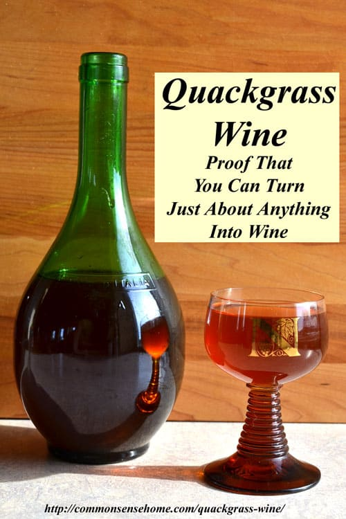 Quackgrass wine - Proof that you can turn just about anything into wine. Another interesting addition to the weed wine pantry for the adventurous fermenter.
