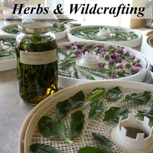 Herbalism and Wildcrafting - Featuring the Weekly Weeder Series