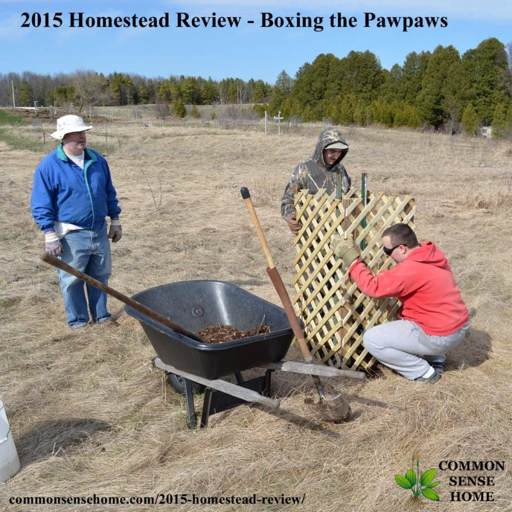 2015 Homestead Review - Boxing Pawpaws