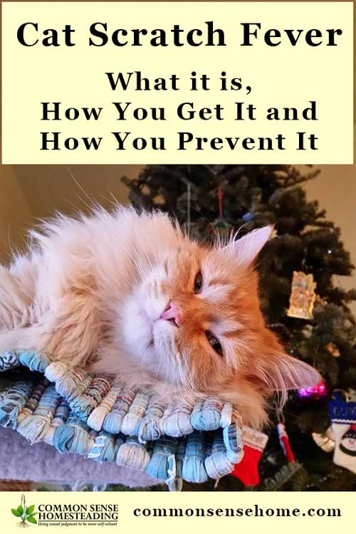 Cat Scratch Fever - What it is, How You Get It and How You Prevent It