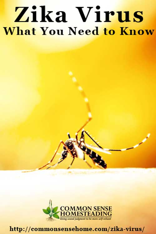 Zika virus has been implicated in potentially deadly birth defects. Learn where it came from, how it is transmitted, symptoms and treatment.