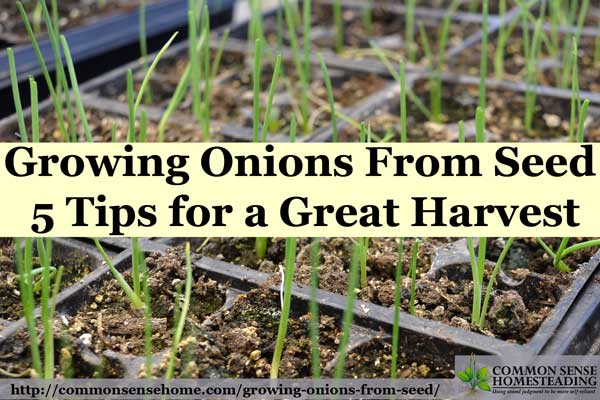 Growing onions from seed lets you grow a range of onion varieties for storage and fresh use. Check out these 5 tips for your best onion harvest ever.