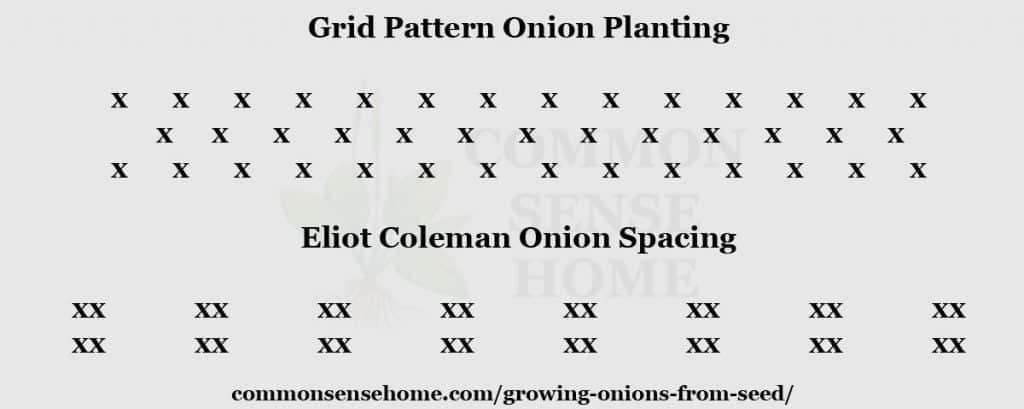 Onion spacing chart