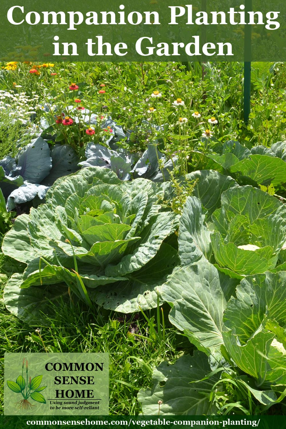Vegetables in the garden