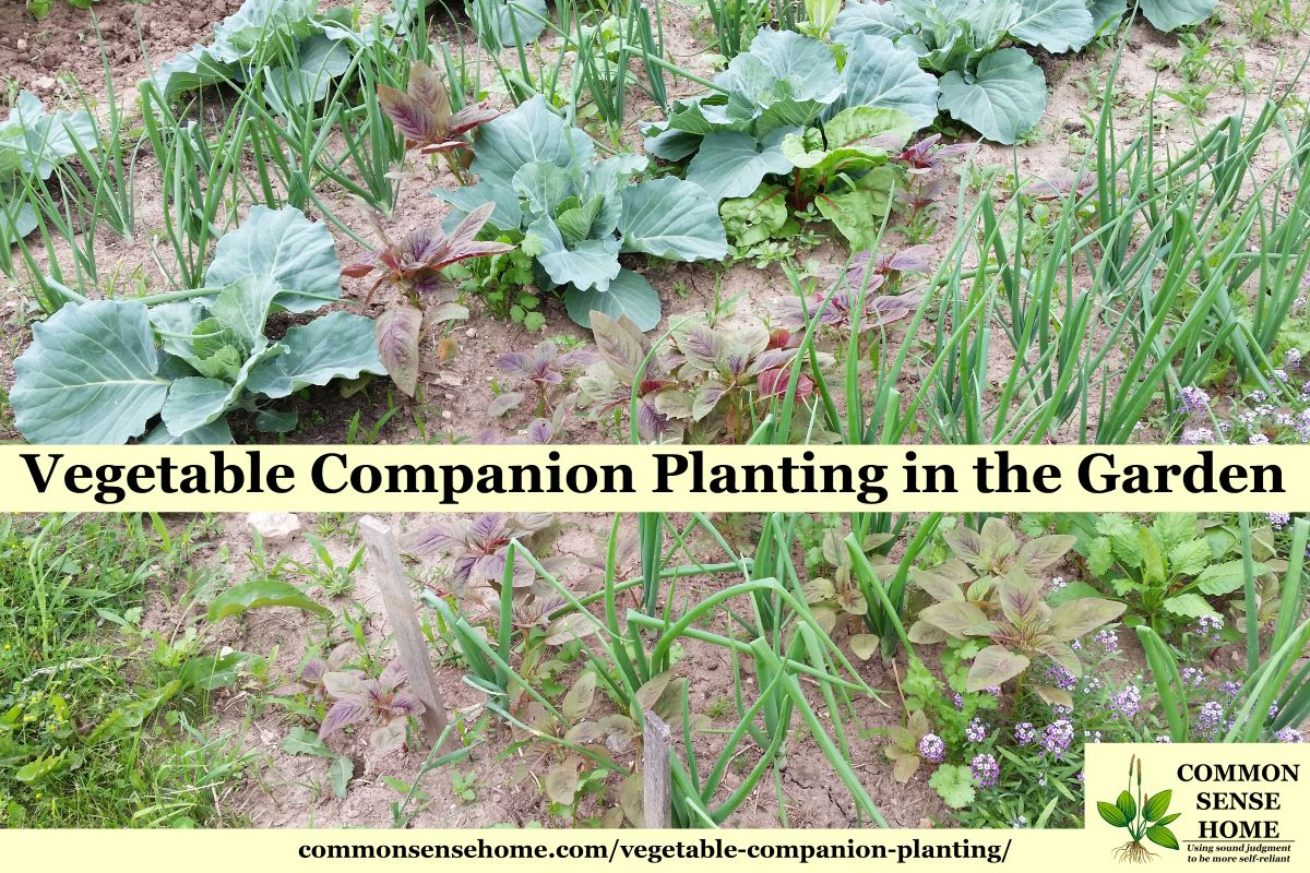 Vegetable companion planting in the garden Flowers to plant in vegetable garden