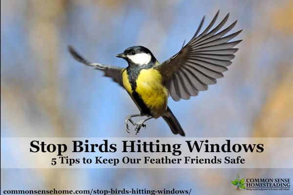 Stop Birds Hitting Windows - Keep Our Feathered Friends Safe. Five simple tricks you can use to help prevent birds from flying into your windows and doors.