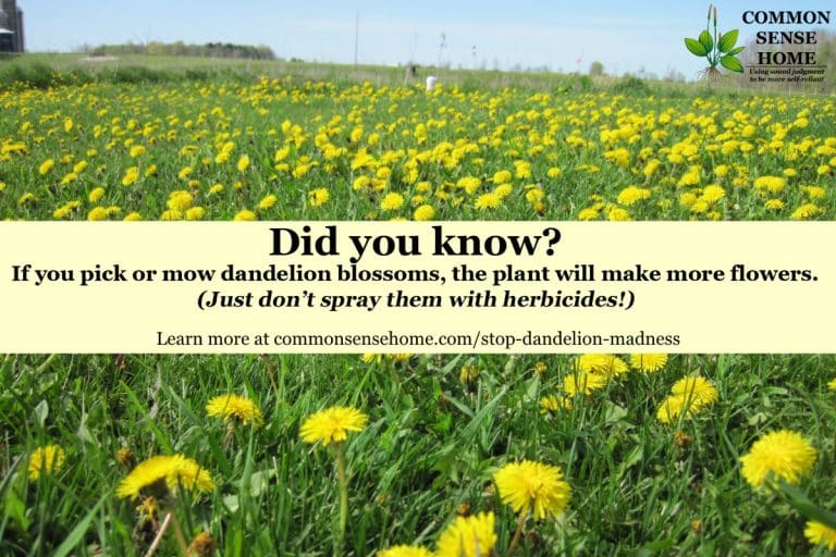 Stop the Dandelion Madness! Making Peace with Dandelions and Bees
