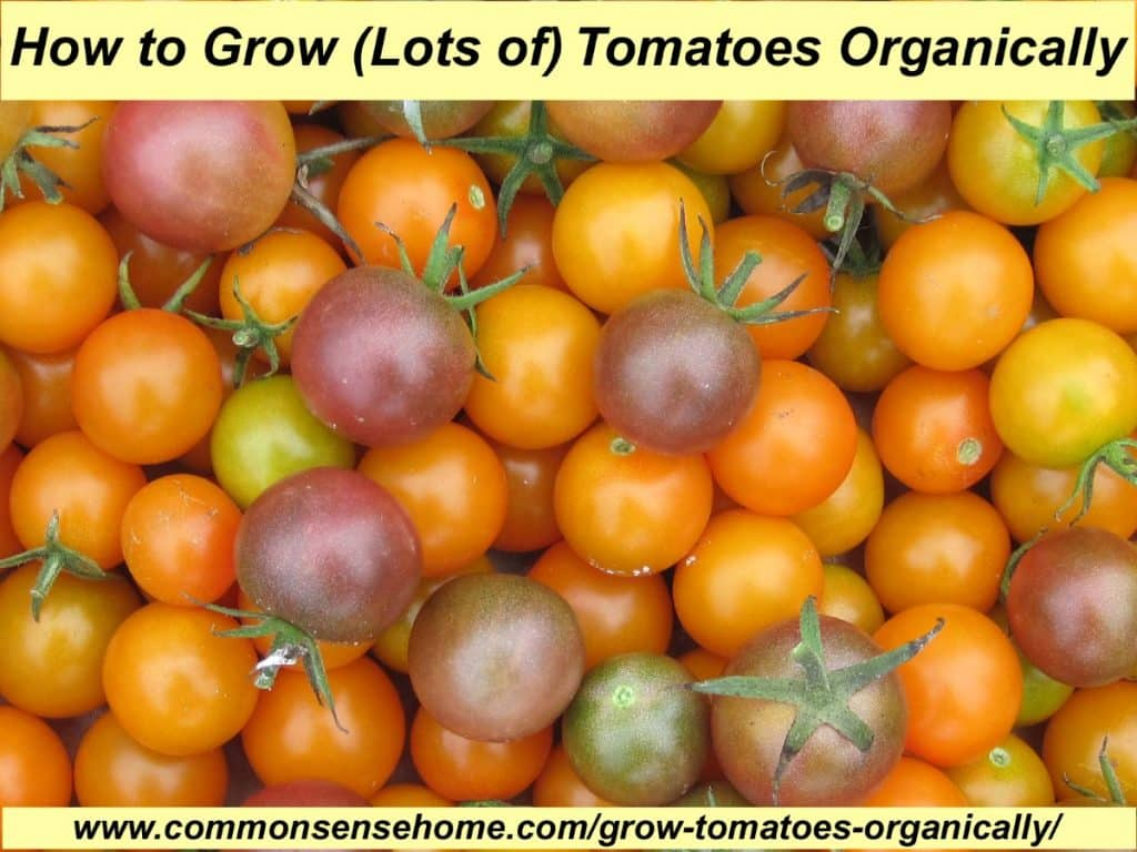 grow lots of tomatoes