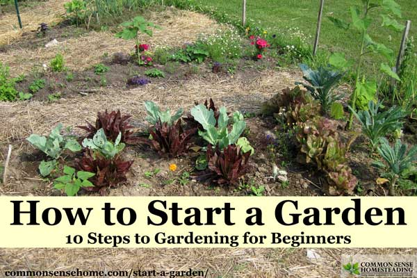 Want to learn how to start a garden? We'll take you through gardening for beginners, from planning your garden to harvest, for stress free gardening.