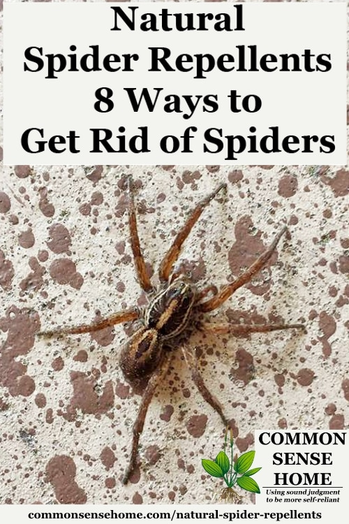 "Spider on wall with text overlay ""Natural Spider Repellents - 8 Ways to Get Rid of Spiders"""