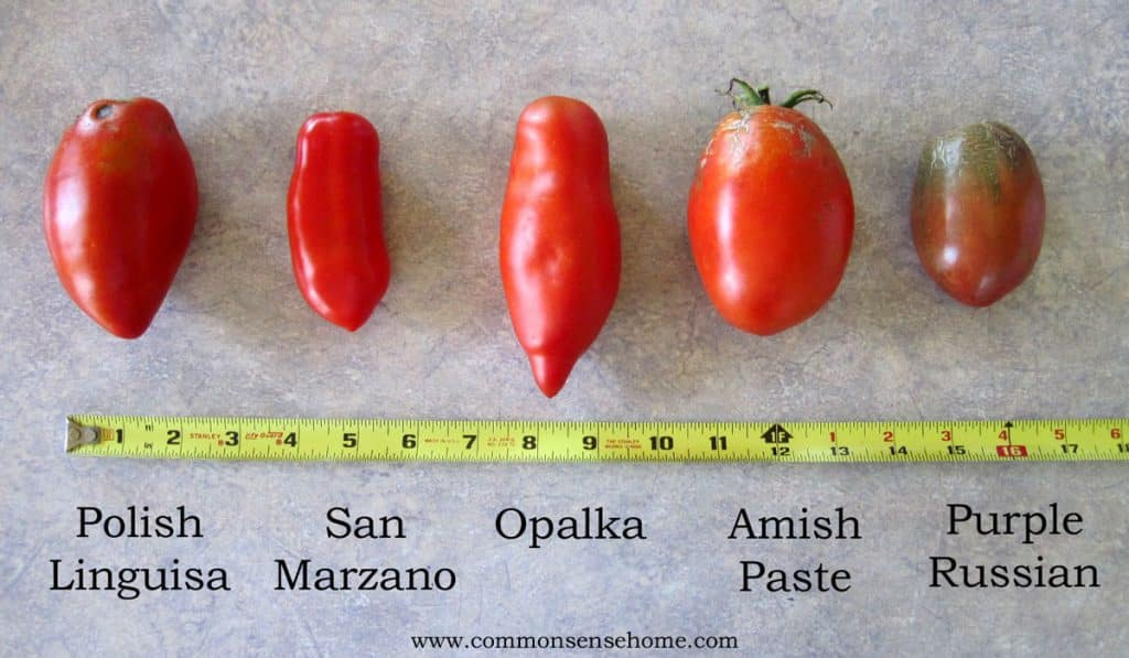 Comparison of types of paste tomatoes