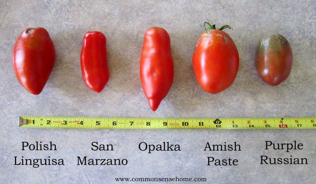 Paste tomato lineup
