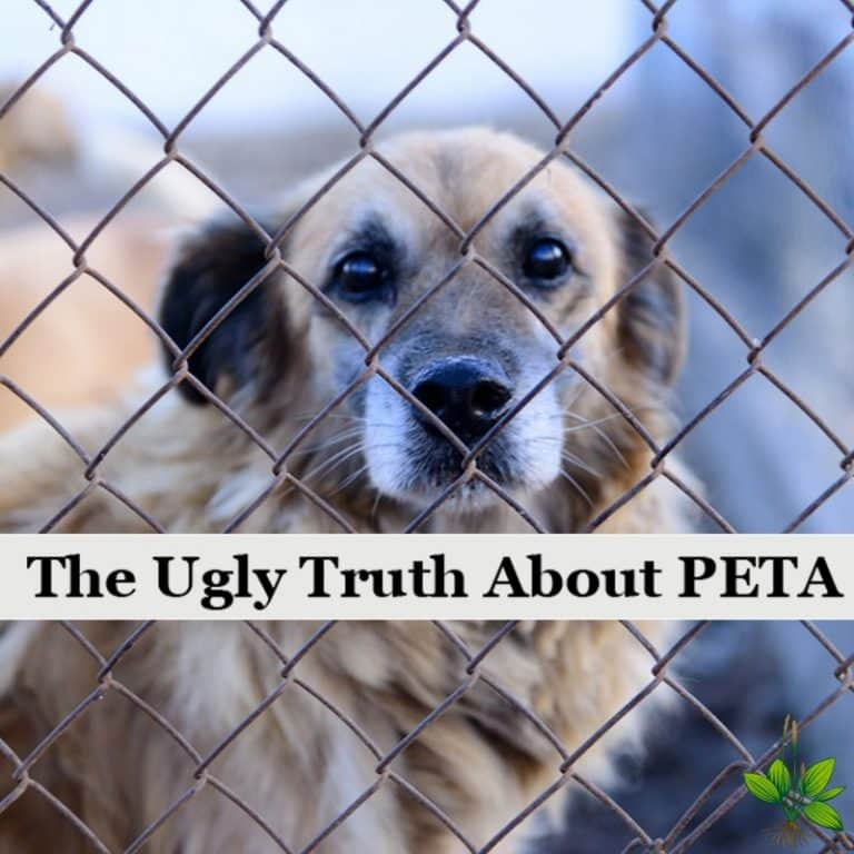 The Ugly Truth About PETA -They're Not What You Might Think