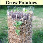 potato tower with straw