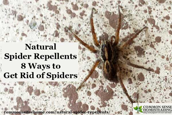 Natural spider repellents 8 ways to get rid of spiders for How to get rid of spiders in the house uk