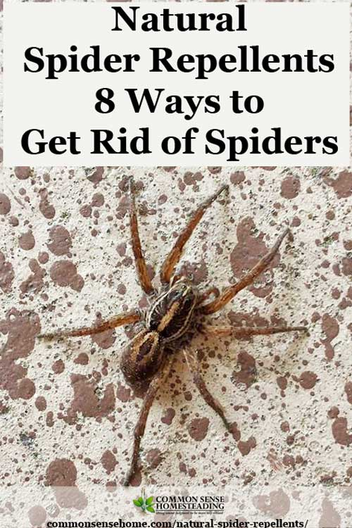 Diy spider pesticide for How to get rid of spiders in the house uk