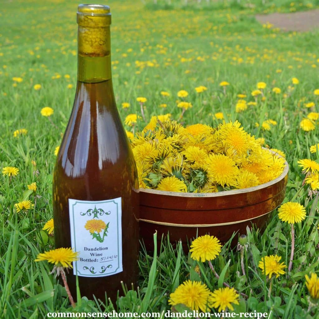 Bottle of homemade dandelion wine next to bowl of dandelion flowers in field of dandelions