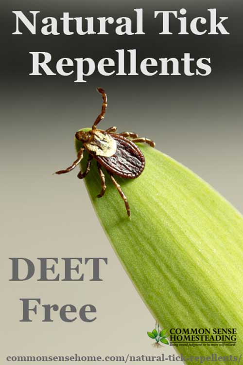 Natural Tick Repellents using herbs and essential oils, the best ways to control ticks and tips to avoid getting bit by ticks.