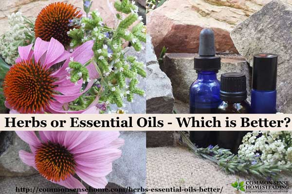 Are herbs or essential oils better? We compare price, ease of use and safety, and offer suggestions for trusted herb and essential oil resources.