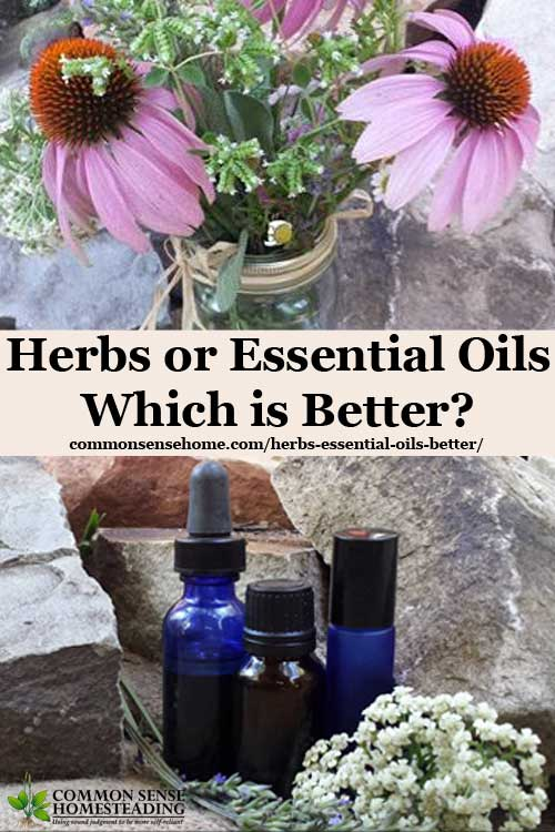 Herbs or Essential Oils - Which is Better?