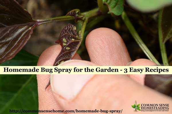 3 Easy homemade bug spray recipes that you can make with ingredients from your garden and pantry. Control bugs without waging heavy duty chemical warfare.