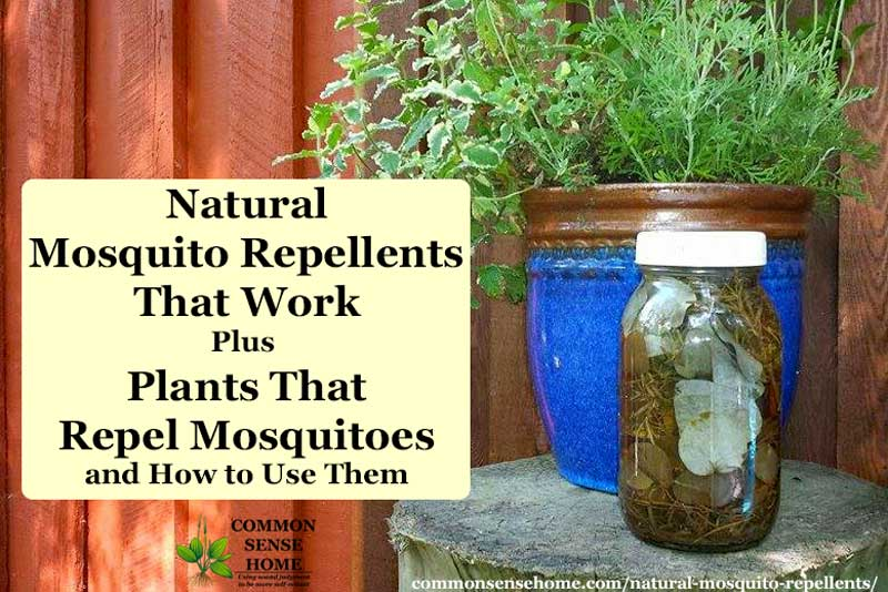 Natural Mosquito Repellents That Work + Plants That Repel