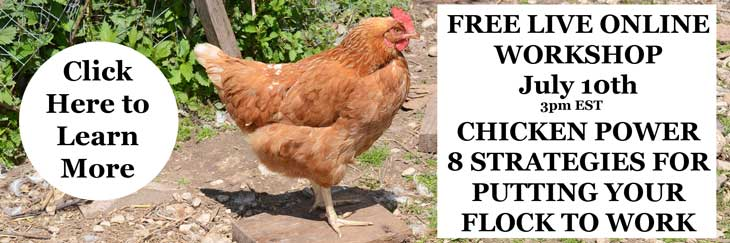 Working Chickens Webinar