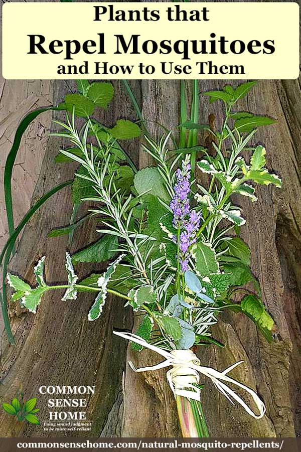 bundle of plants that repel mosquitoes