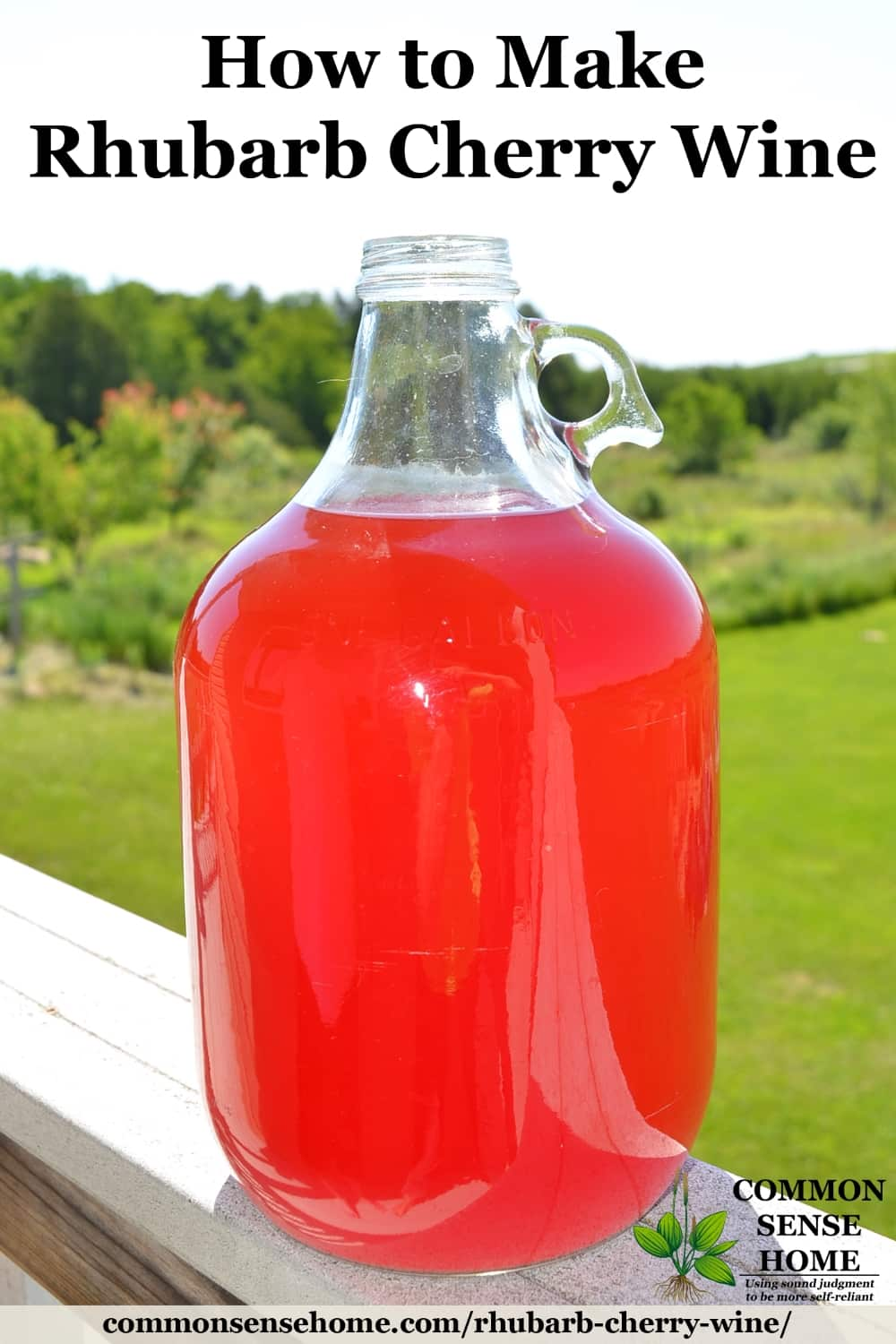 Gallon jug of bright pink homemade rhubarb cherry wine against a green background