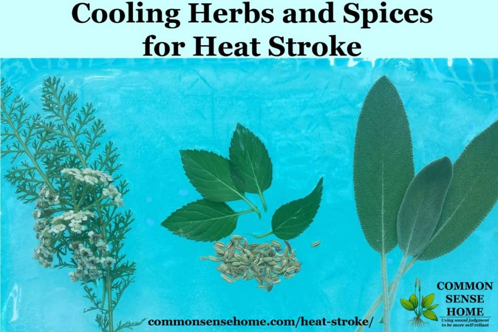 cooling herbs and spices