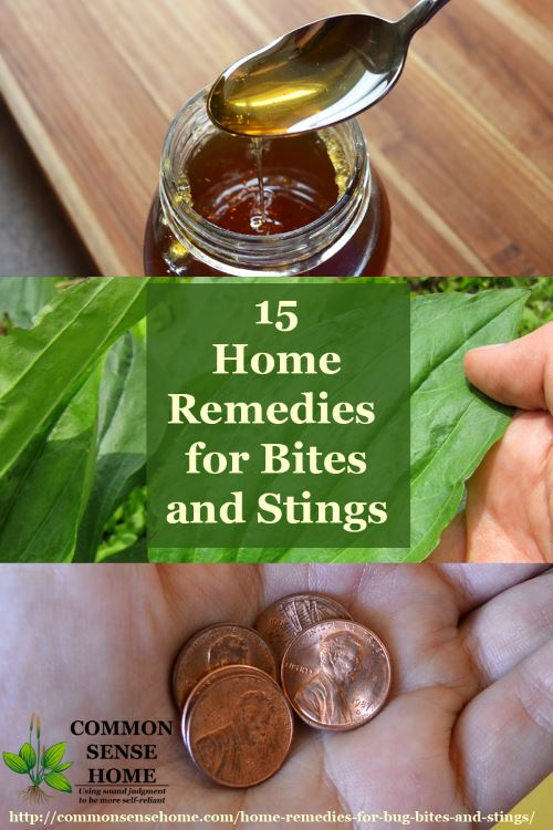 Collage of home remedies for bug bites and stings