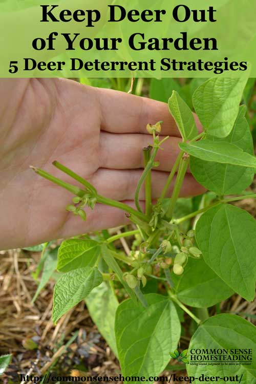 Keep Deer Out of Your Garden 5 Deer Deterrent Strategies